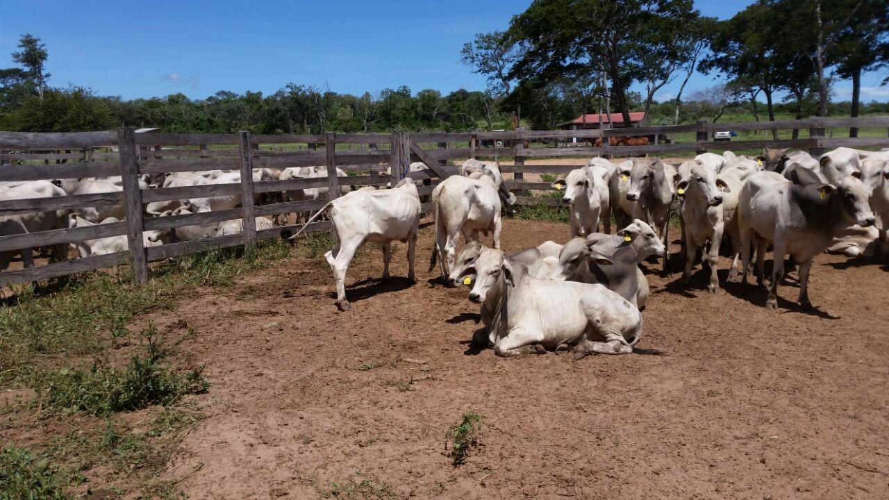 Terreno en Venta DE OCASION!! VENDO PROPIEDAD GANADERA COMPLETA, MUY CERCA DE LA CIUDAD DE SANTA CRUZ Foto 12
